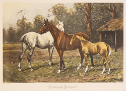 Engraving, Hand coloured restrike engraving, A Promising Youngster Large image. Click to enlarge