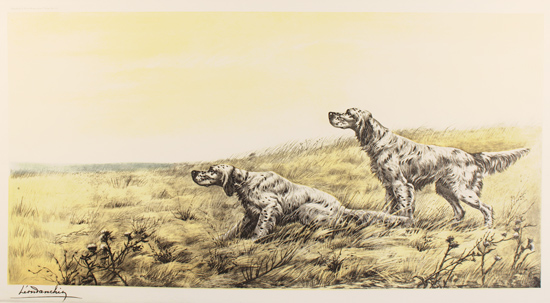 Engraving, Hand coloured restrike engraving, English Setters in Field No frame image. Click to enlarge