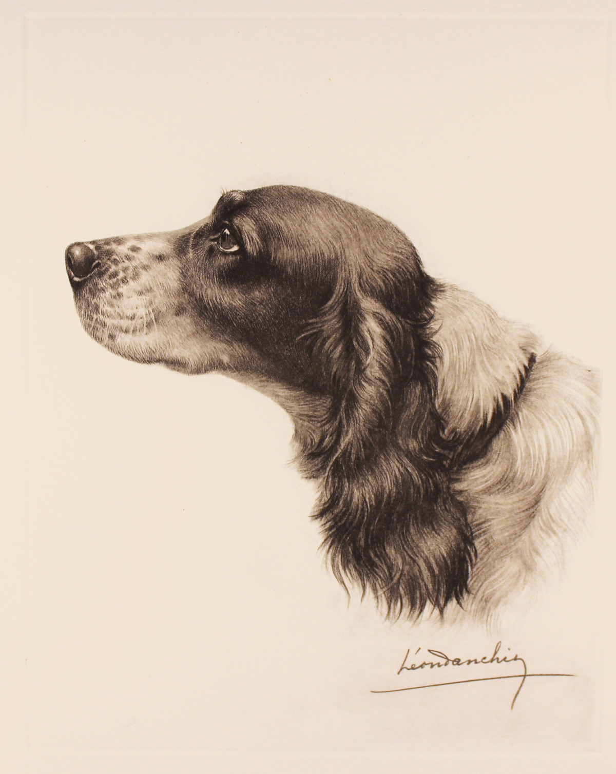 Engraving, Hand coloured restrike engraving, Black and White Cocker Spaniel, click to enlarge