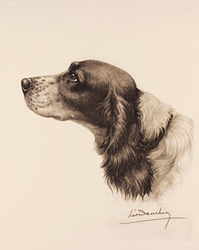 Engraving, Hand coloured restrike engraving, Black and White Cocker Spaniel Large image. Click to enlarge