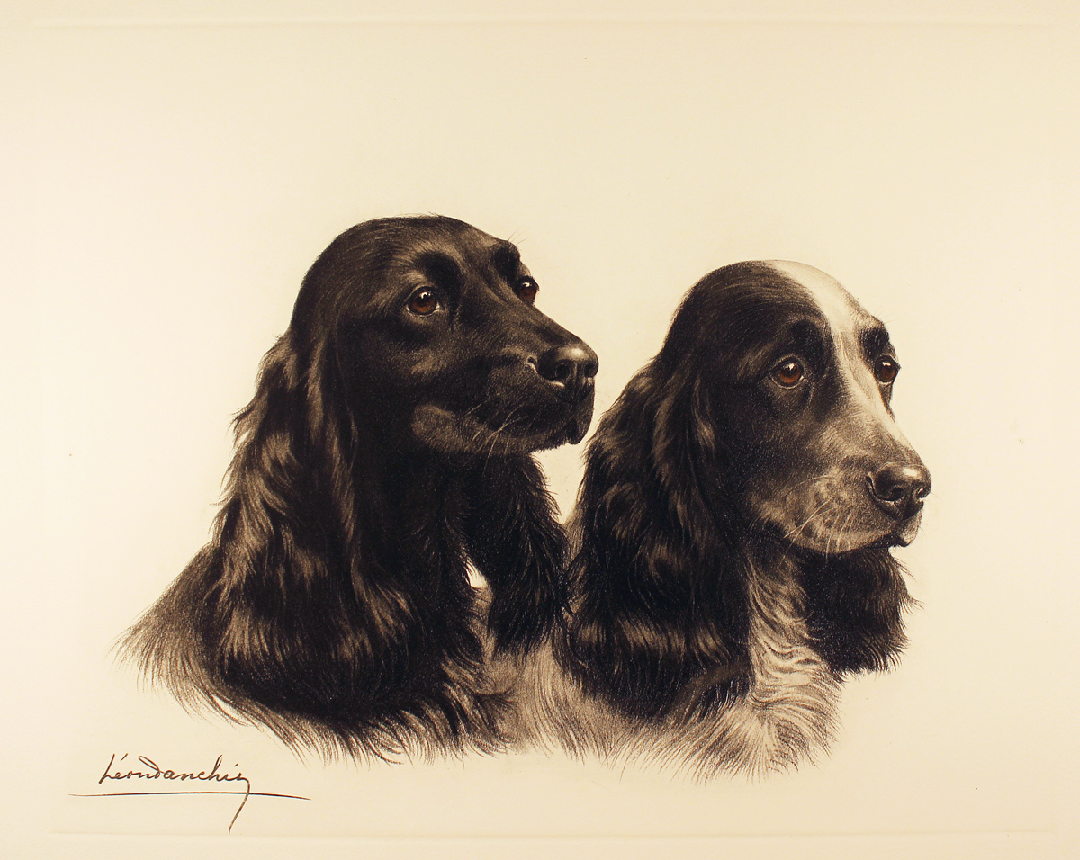 Engraving, Hand coloured restrike engraving, Two Cocker Spaniels. Click to enlarge
