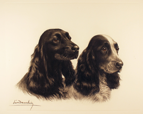 Engraving, Hand coloured restrike engraving, Two Cocker Spaniels Without frame image. Click to enlarge