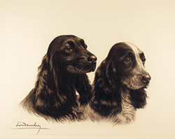 Engraving, Hand coloured restrike engraving, Two Cocker Spaniels Large image. Click to enlarge