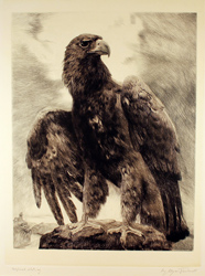Engraving, Engraving, Eagle