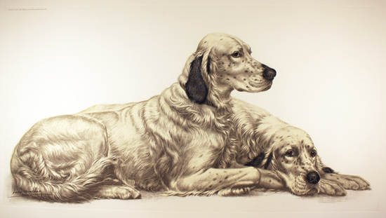Engraving, Hand coloured restrike engraving, English Setters at Rest No frame image. Click to enlarge