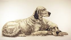 Engraving, English Setters at Rest, Hand coloured restrike engraving