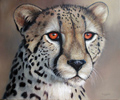 Pip McGarry, Original oil painting on canvas, Cheetah Portrait