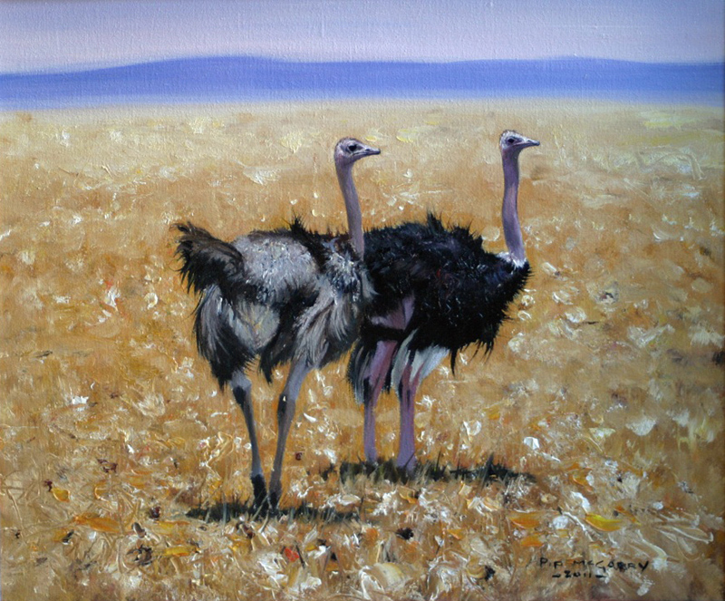 Pip McGarry, Original oil painting on canvas, Ostriches in the Mara. Click to enlarge