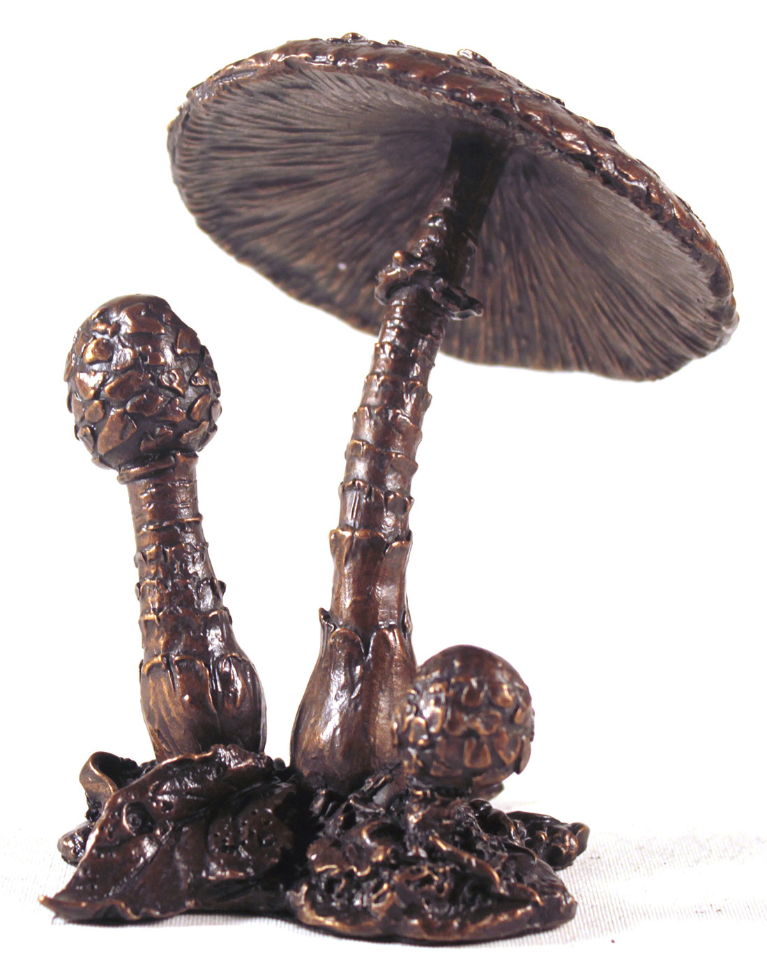 Keith Sherwin, Bronze, Parasol Mushroom. Click to enlarge