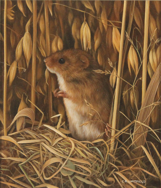Carl Whitfield, Original oil painting on panel, Harvest Mouse No frame image. Click to enlarge