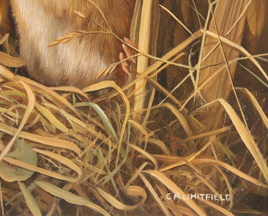 Carl Whitfield, Original oil painting on panel, Harvest Mouse Signature image. Click to enlarge