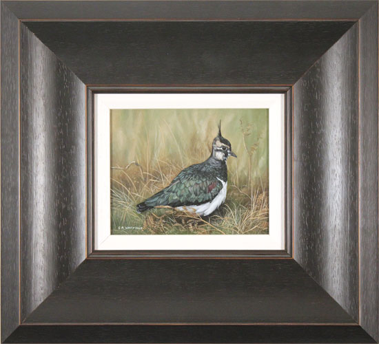Carl Whitfield, Original oil painting on panel, Lapwing