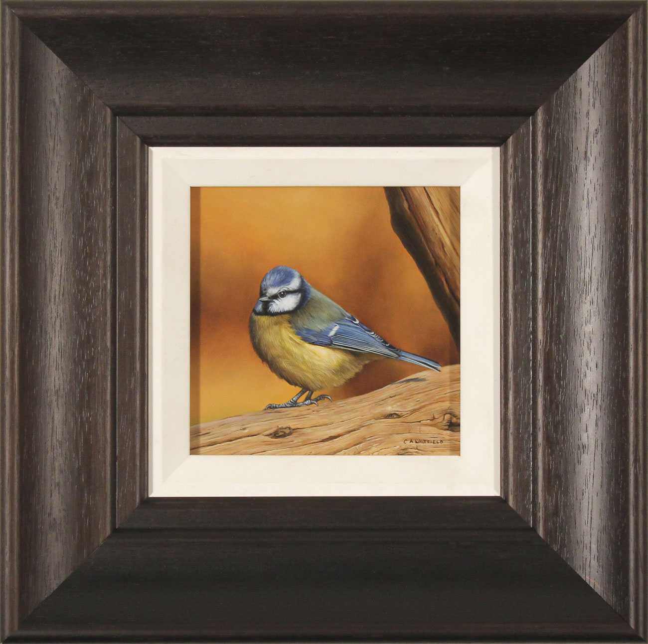 Carl Whitfield, Original oil painting on panel, Blue Tit, click to enlarge