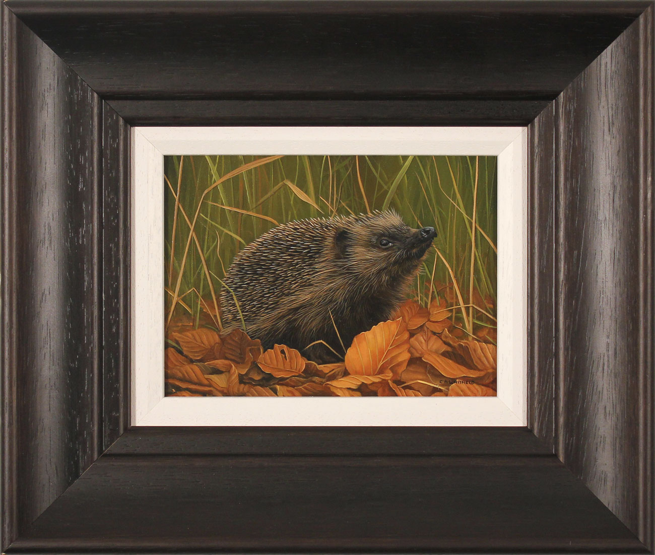 Carl Whitfield, Original oil painting on panel, Hedgehog, click to enlarge