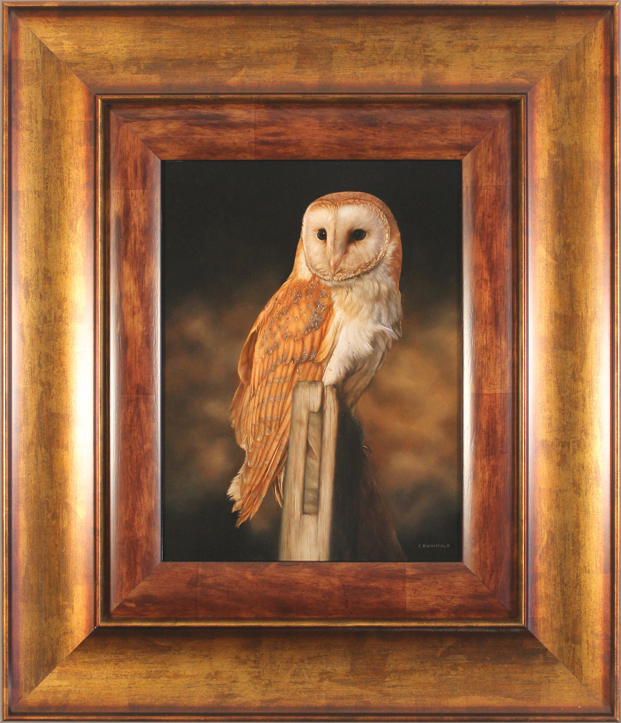 Carl Whitfield, Original oil painting on panel, Barn Owl, click to enlarge
