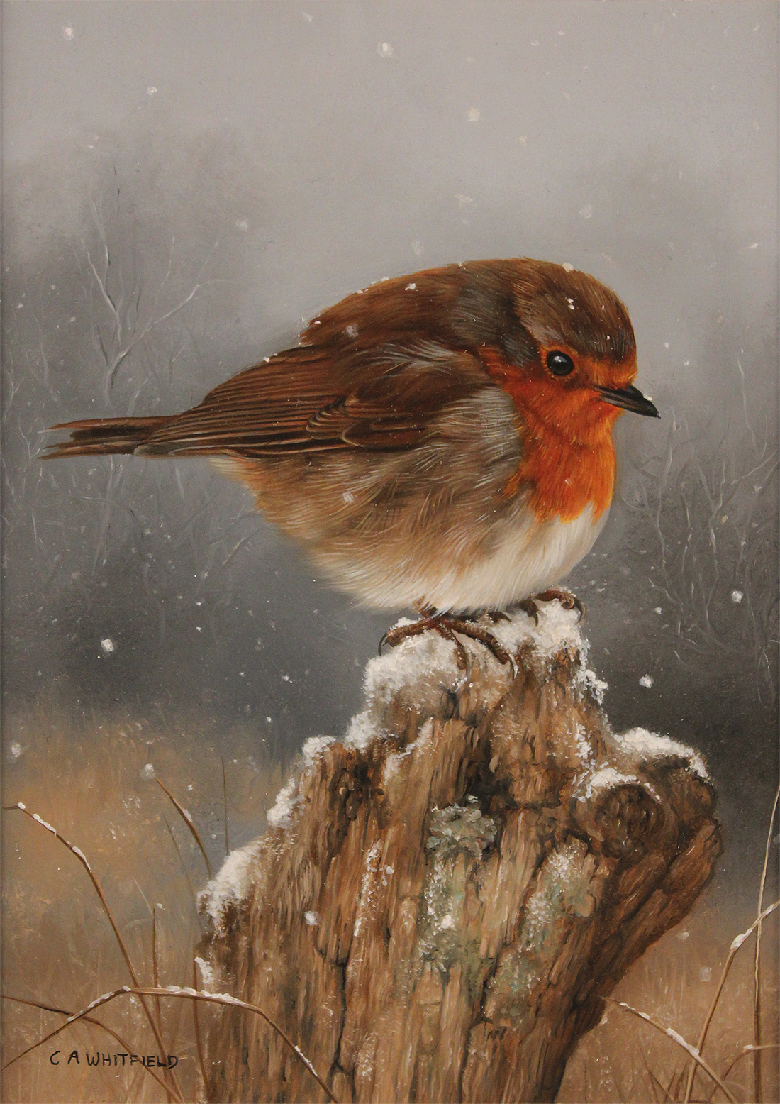 Carl Whitfield, Original oil painting on panel, Robin, click to enlarge