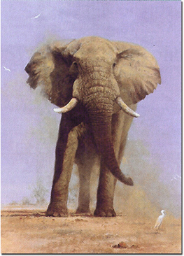 David Shepherd, Signed limited edition print, My Savuti Friend Without frame image. Click to enlarge