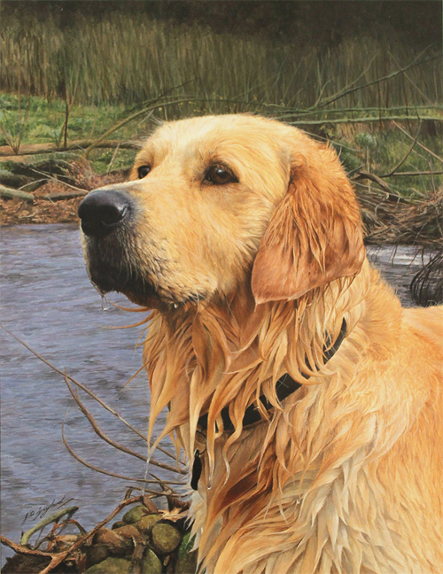 Jacqueline Gaylard, SOFA, Original acrylic painting on board, Golden Retriever Without frame image. Click to enlarge