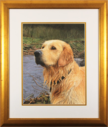 Jacqueline Gaylard, SOFA, Original acrylic painting on board, Golden Retriever