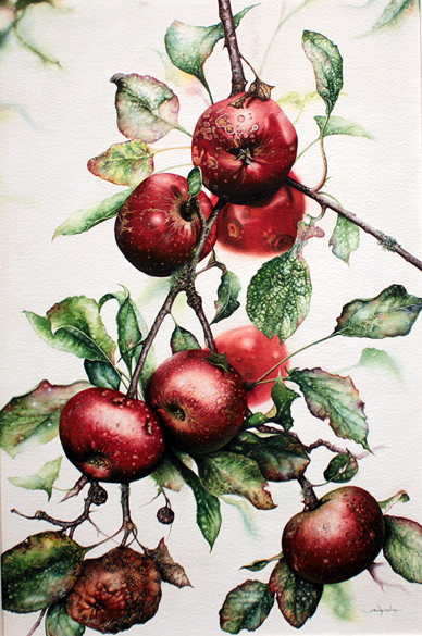 Jerry Walton, Watercolour, Blemished Reds, click to enlarge