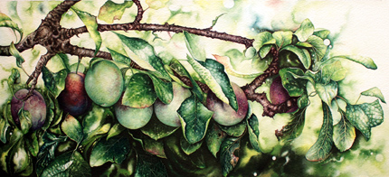 Jerry Walton, Watercolour, Plum Line No frame image. Click to enlarge