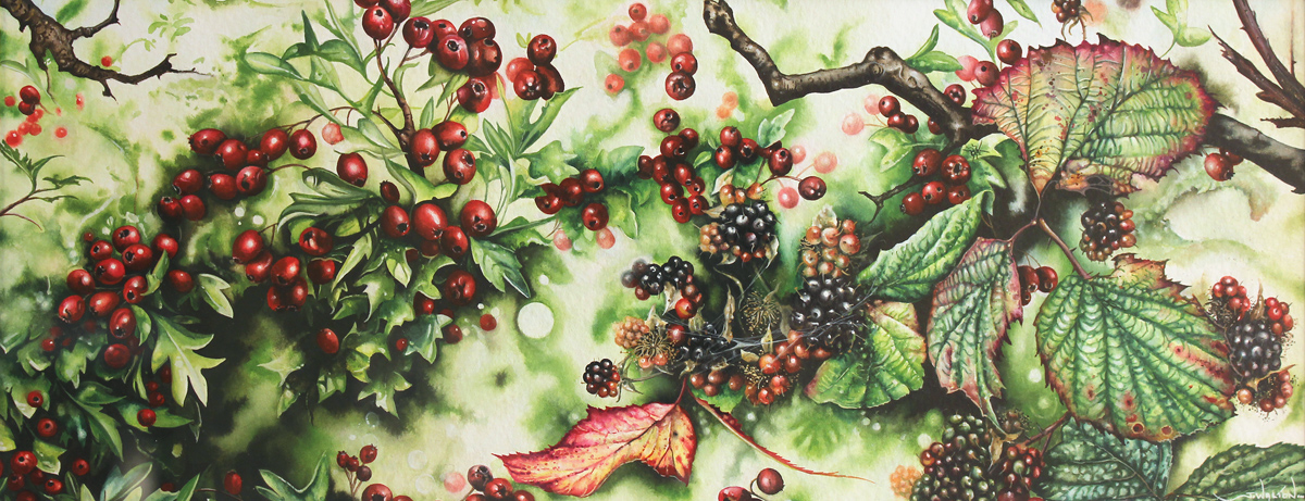 Jerry Walton, Watercolour, Brambles and Hawthorn Berries, click to enlarge