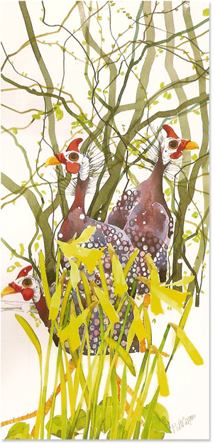 Mary Ann Rogers, Signed limited edition print, Guinea Fowls and Daffodils, click to enlarge