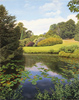 Michael James Smith, Lily Pond, Scotney Castle'