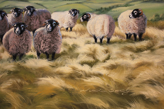 Natalie Stutely, Original oil painting on panel, Swaledale Flock in the Cleveland Way Signature image. Click to enlarge