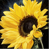 Neill Jenkins, Original oil painting on canvas, Columbia Road Sunflower