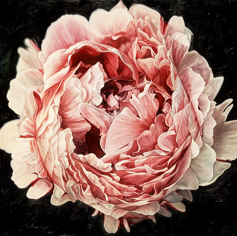 Neill Jenkins, Original oil painting on canvas, Pink Peony 2. Click to enlarge