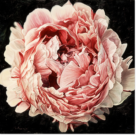 Neill Jenkins, Original oil painting on canvas, Pink Peony 2 Without frame image. Click to enlarge