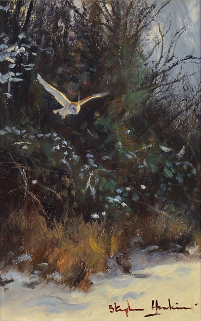 Stephen Hawkins, Original oil painting on panel, Barn Owl in Flight Without frame image. Click to enlarge