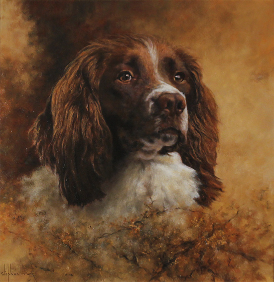 Stephen Park, Original oil painting on panel, Springer Spaniel No frame image. Click to enlarge