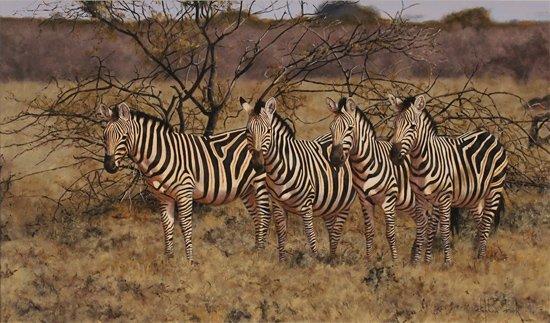 Stephen Park, Original oil painting on panel, Zebra