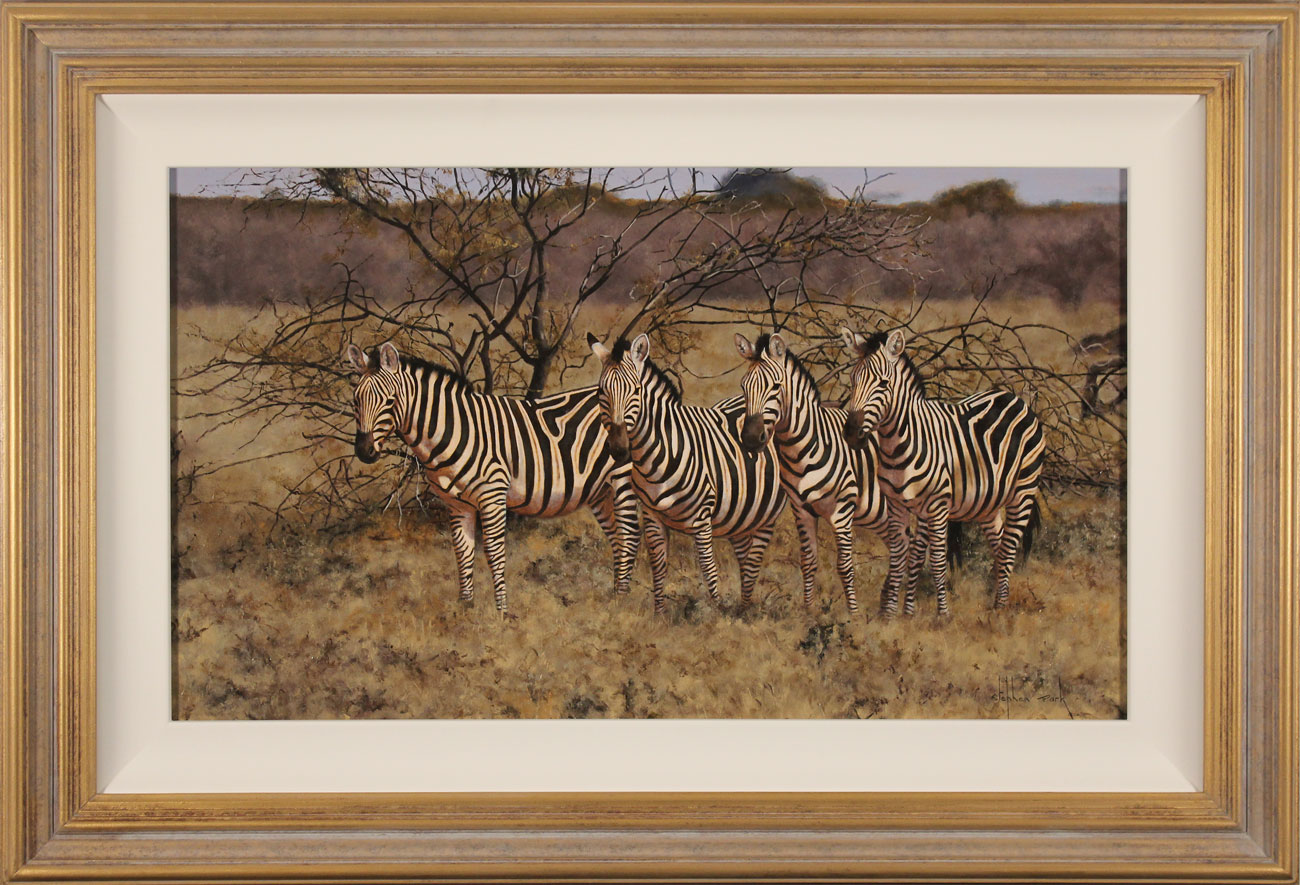 Stephen Park, Original oil painting on panel, Zebra. Click to enlarge