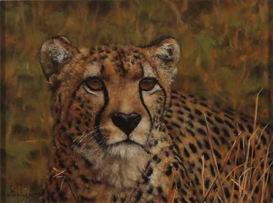 Stephen Park, Original oil painting on panel, Cheetah