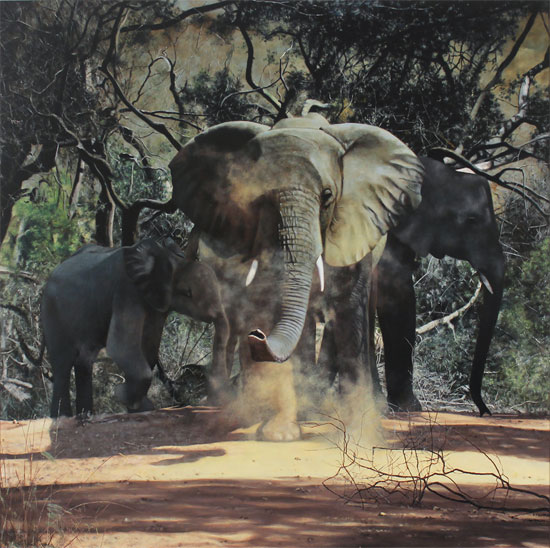 Stephen Park, Original oil painting on panel, Elephants No frame image. Click to enlarge