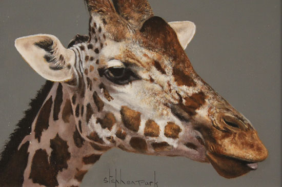 Stephen Park, Original oil painting on panel, Giraffe No frame image. Click to enlarge