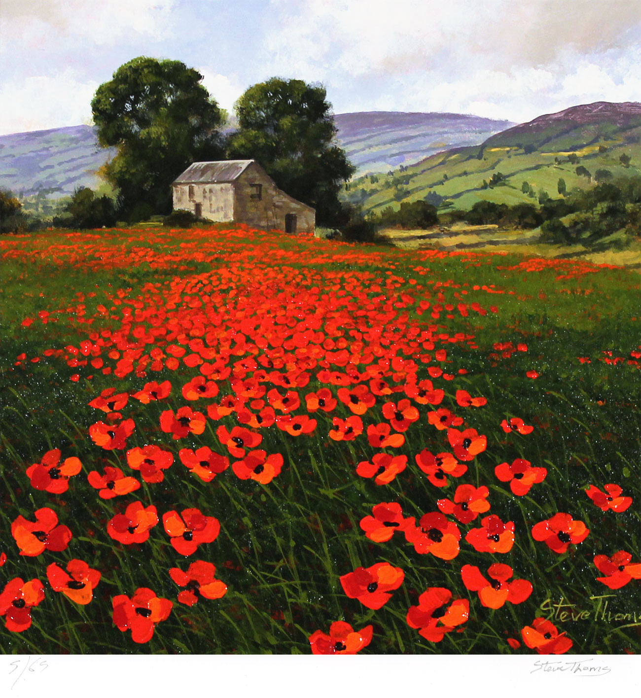 Steve Thoms, Signed limited edition print, Yorkshire Poppies. Click to enlarge
