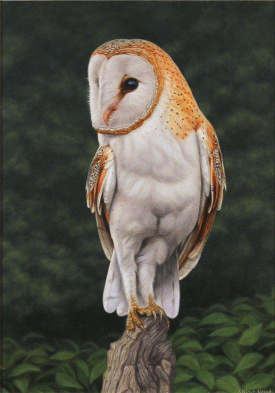 Stuart Herod, Original oil painting on panel, Barn Owl
