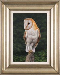 Stuart Herod, Original oil painting on panel, Barn Owl