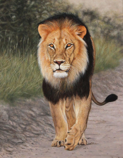 Stuart Herod, Original oil painting on panel, Lion Without frame image. Click to enlarge