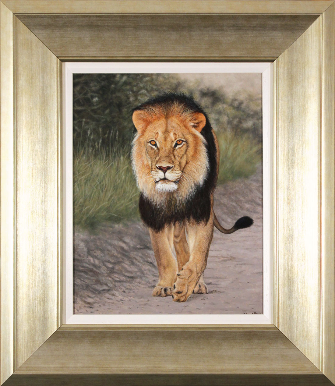 Stuart Herod, Original oil painting on panel, Lion, click to enlarge