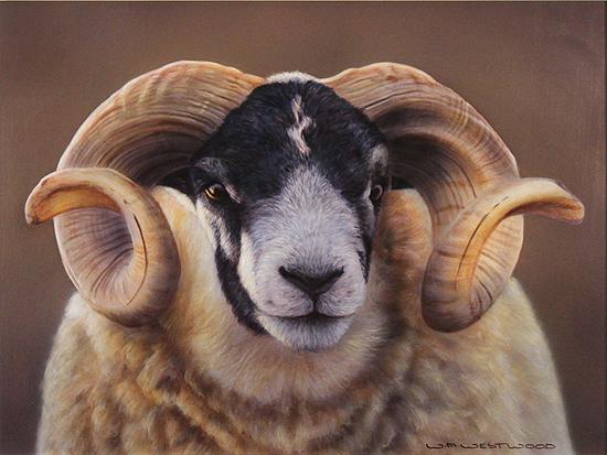 Wayne Westwood, Signed limited edition print, Swaledale Ram. Click to enlarge