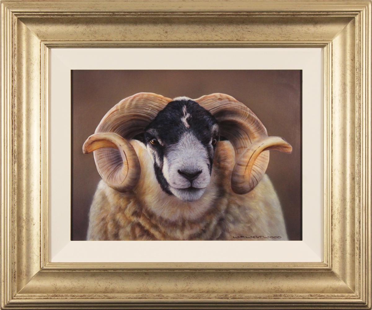 Wayne Westwood, Original oil painting on panel, Swaledale Ram, click to enlarge