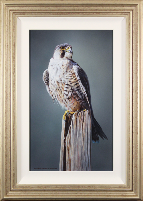 Wayne Westwood, Original oil painting on panel, Peregrine Falcon, click to enlarge