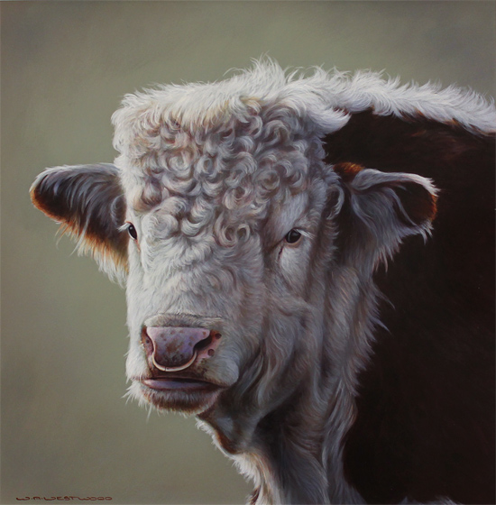 Wayne Westwood, Original oil painting on panel, Hereford Bull