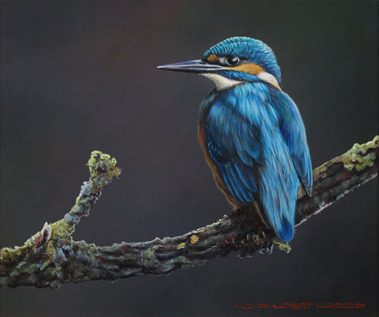 Wayne Westwood, Original oil painting on panel, Kingfisher Without frame image. Click to enlarge