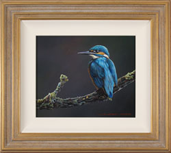 Wayne Westwood, Original oil painting on panel, Kingfisher Large image. Click to enlarge